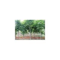 【七叶树价格】、七叶树价格专题-福步商务供求网
