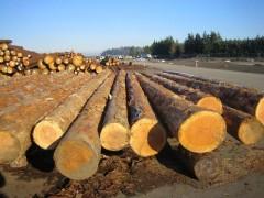 加拿大原木进口报关|常州港木材代理