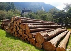 澳大利亚木材进口哪个港口清关方便|