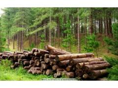 山东港木材进口报关价格|木材报关费